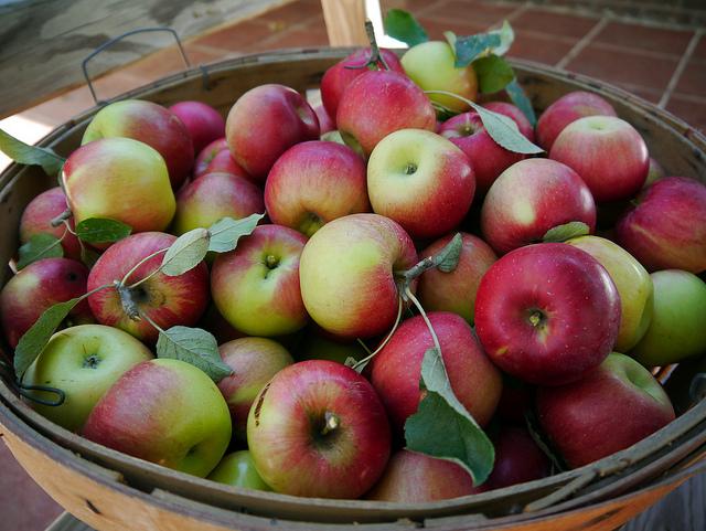 Apple picking season! Where to pick organic apples in Quebec?