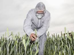 Say no to WHEAT! What big Food Corps don't want you to know about this poisonous whole grain!