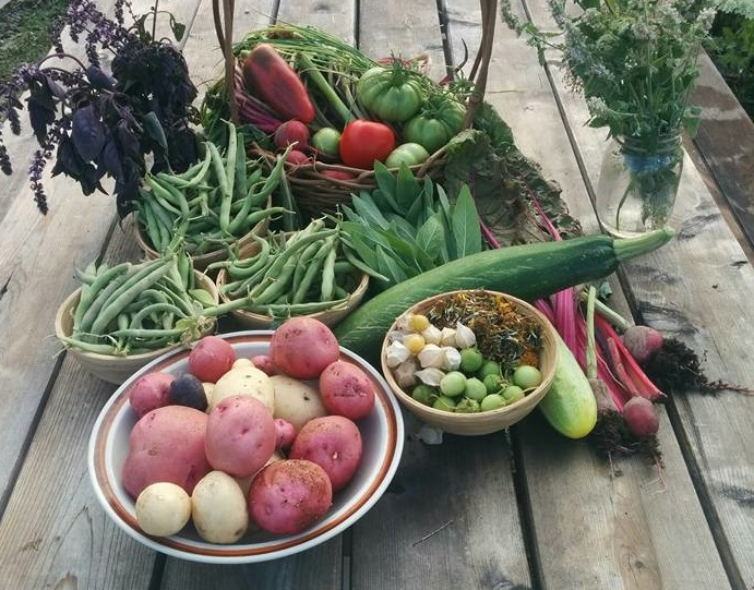 How your plants heal YOUR nutritional deficiencies: The benefit of growing your own food.